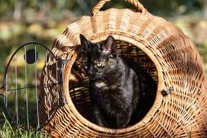 Katze überfahren: Als Fahrerflucht wird es nicht gewertet, wenn Sie einfach wegfahren, jedoch müssen Tierschutzrechte beachtet werden.