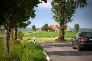 Sie sollten die Höchstgeschwindigkeit auf der Landstraße nicht ausfahren, wenn Gefahrenzeichen z. B. vor Wildwechsel warnen.